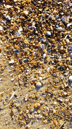 shell hash, Hatteras Island